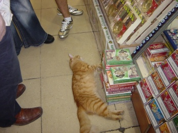 cat-sleeping-in-bazaar.jpg