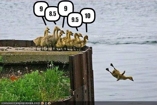 Duck- Duck- Goose! Funny-pictures-ducks-rate-eachother-as-they-dive